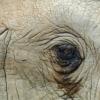 Megrázó videók: 50 év fogság után kiszabadították, sírt az elefánt